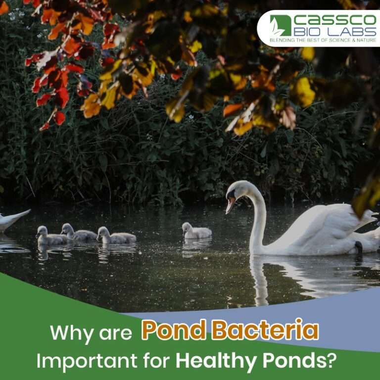 Why Are Pond Bacteria Important for Healthy Ponds?