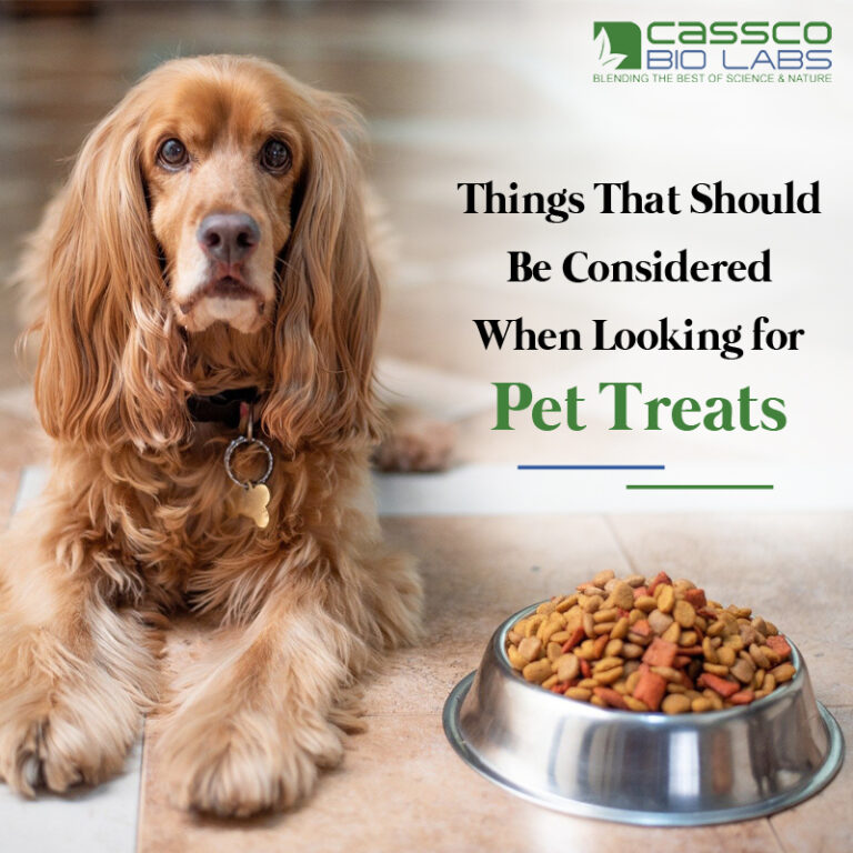 Things That Should Be Considered When Looking for Pet Treats