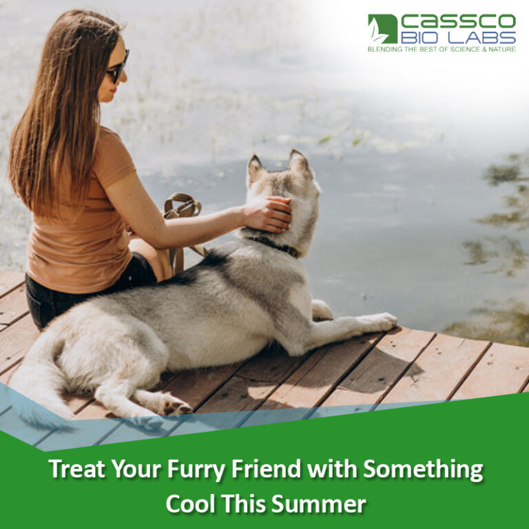 Treat Your Furry Friend with Something Cool This Summer